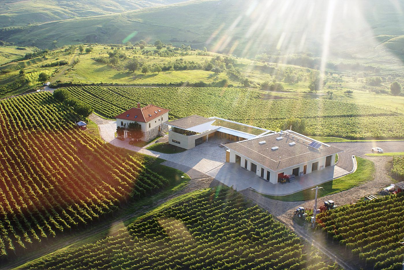 Photo: aerial view of the winery building surrounded by bright green vineyards; in the background, a slightly hilly landscape; sun rays across the whole scenery